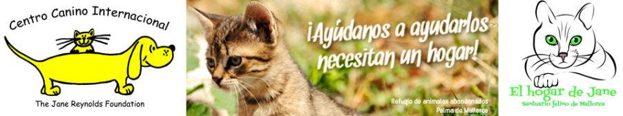 santuaro felino de Mallorca